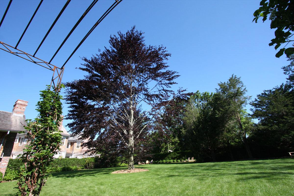 copper-beach-transplant-inn-at-windmill-lane