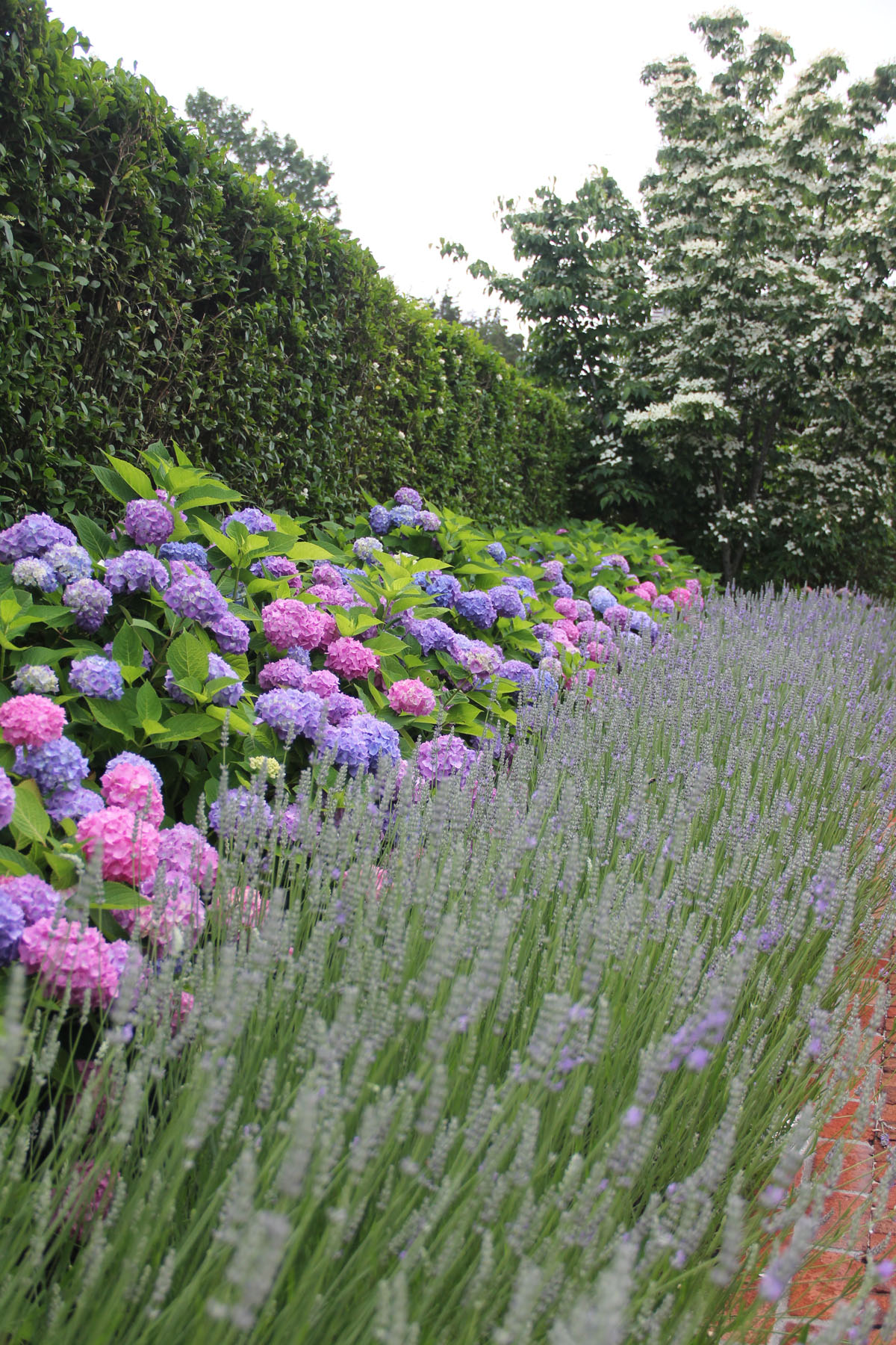 lavander-plantings-inn-at-windmill-lane-3