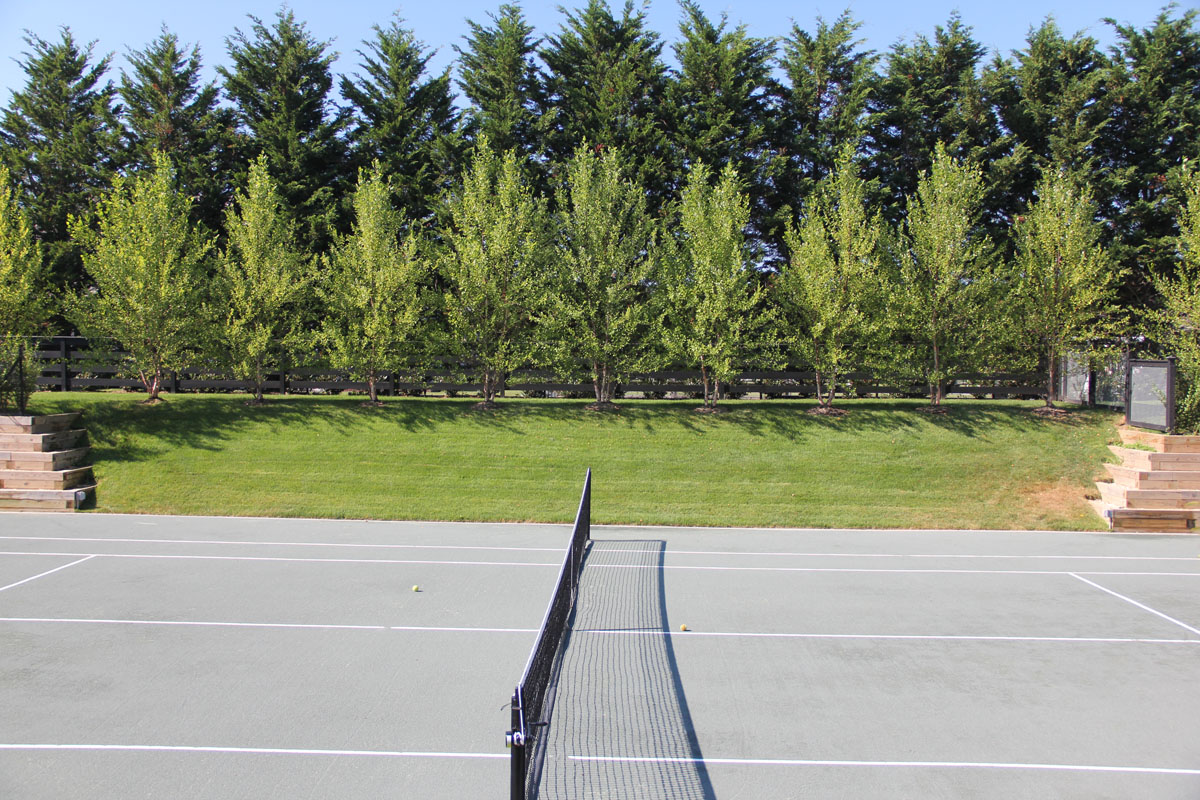 heritage-birch-and-cedar-tree-privacy-screening-for-tennis-court