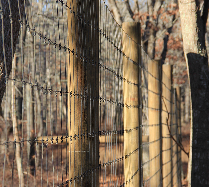 Deer Protection & Custom Fencing