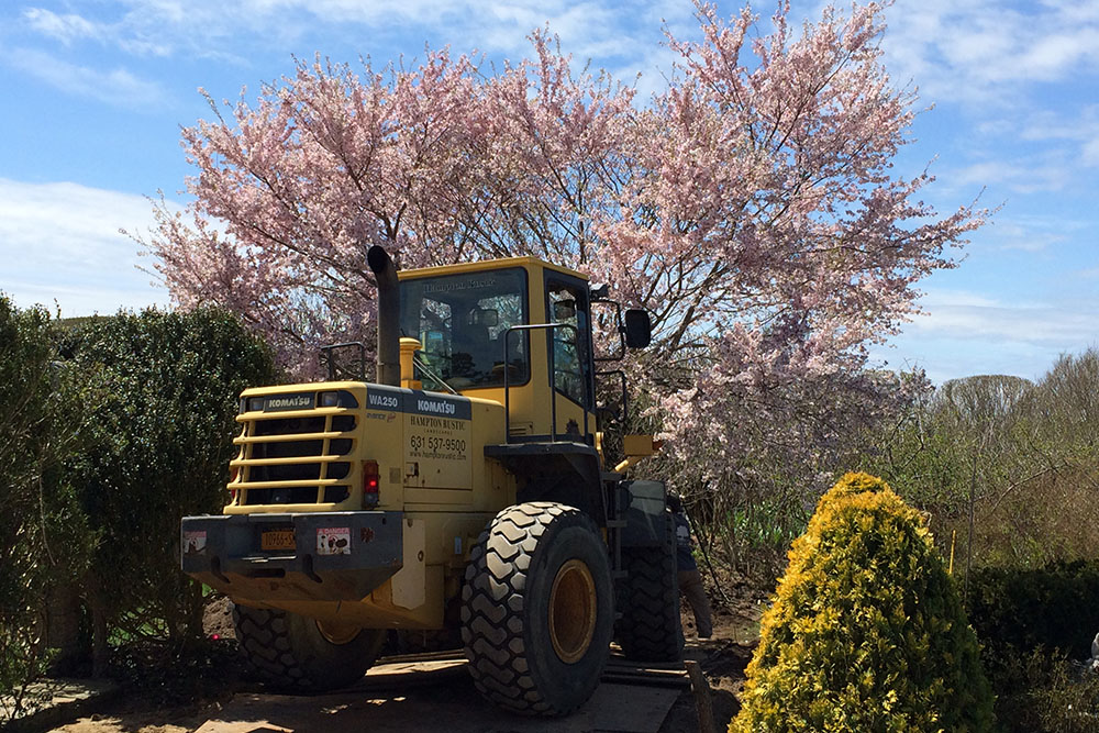 moving-a-mature-cherry-tree-within-same-ocean-front-property-west-end-rd-east-hampton